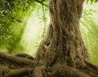"""砍伐森林以及物种灭绝也许更有可能是导致流行病的""""罪魁祸首"""""""