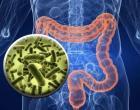 肠道噬菌体改变小鼠癌症疗法的作用